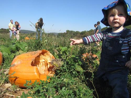 Thomas wants that pumpkin
