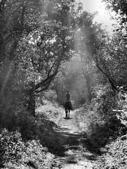 Walk on (Claire Wroe) Tags: trees shadow blackandwhite bw horse woman sun sunlight white black girl monochrome animal grey mono countryside ride cheshire walk gray rider congleton