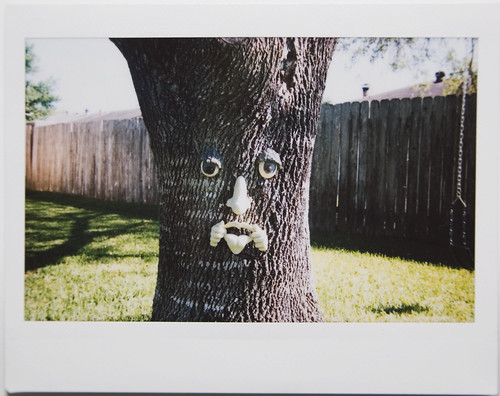 Instax: freaky tree face