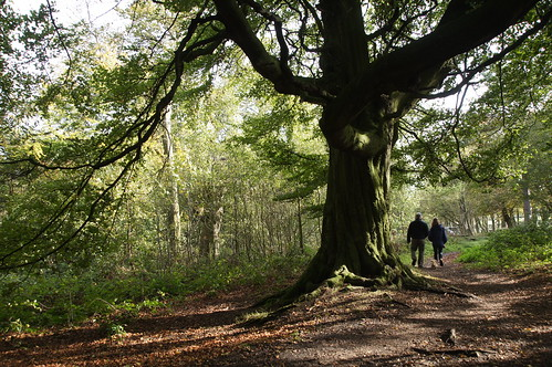 Fred, Diana and Cuddles under a big oak by CharlesFred