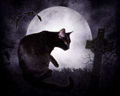TheBlackCat (~Brenda-Starr~) Tags: trees moon halloween nature grass night cat blackcat cross bat brendastarr october2011 artistictreasurechest