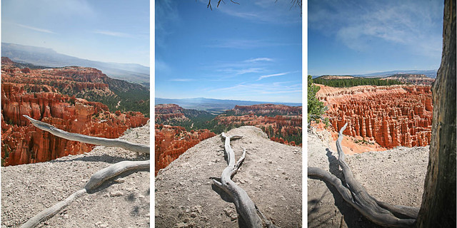 bryce roots
