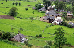 Green Himachal (Monsoon Lover) Tags: india shimla hp flickr village paddy himachal himachalpradesh satluj rampur sudipguharay