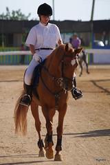 Estoi horse fair (Fotosintese Algarve) Tags: people horse portugal caballo gente menschen algarve pferde cavalo estoi equine equino horsefair obstaculos concursodesaltos  feiradohipismo