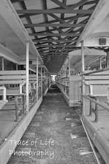 Train_0874 (Trace of Life Photography) Tags: ohio abandoned nikon forgotten amusementpark americana lesourdsvillelake