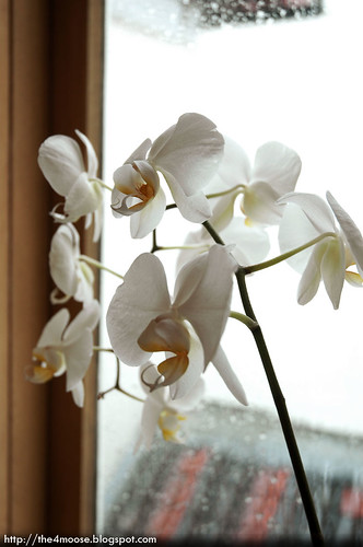 Sunhead of 1617 B&B - Orchids