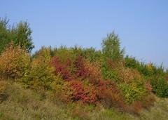 Farbenfrohe Herbstlandschaft