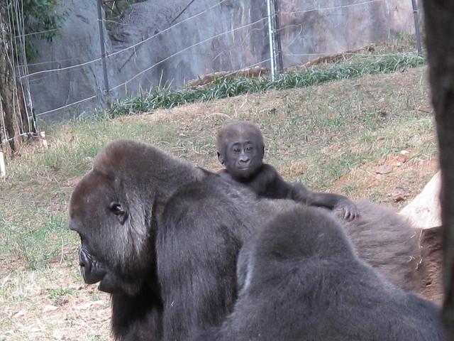Zoo 0280