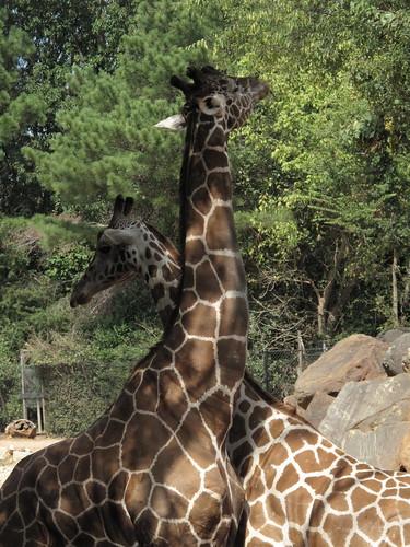 Zoo 0242