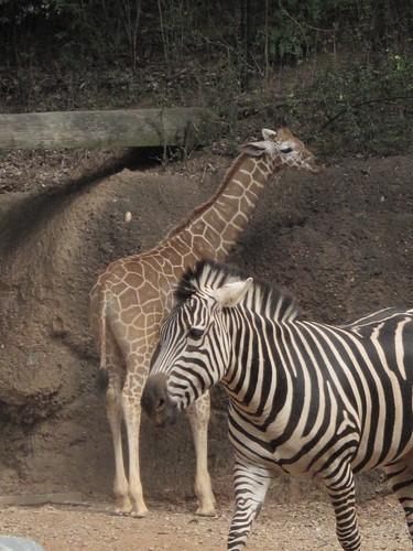 Zoo 0227