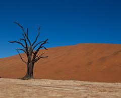 Dead Vlei (Julien Lagarde) Tags: africa geotagged day desert dunes clear desierto namibia sossusvlei namib deadvlei namibdesert namibnaukluft geo:lat=2475770000 geo:lon=1529221667