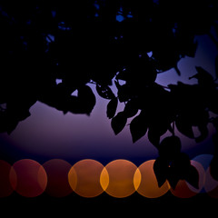 leaves,lights,sunset 2 (yskark) Tags: sunset silhouette tokyo bokeh    tamagawa