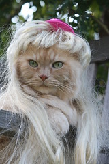 Lady Gaga...paparazzi.. (karlaspence35) Tags: pink hat lady cat molly wig paparazzi gaga savedbythedeltemeuncensoredgrou