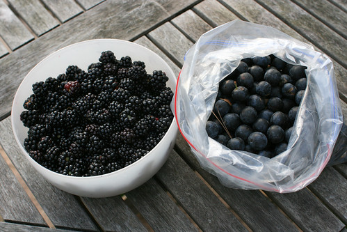 Blackberries and Sloes