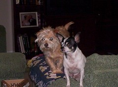 Beamer and Gizmo
