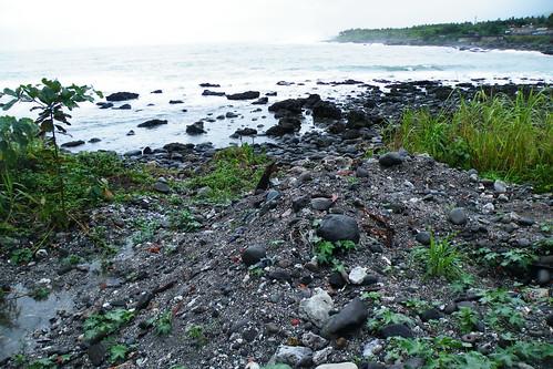 開發單位將沉沙池廢棄土方直接堆積在潮間帶 宋明燕攝