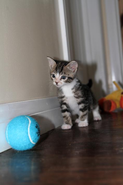 092111_kittens14