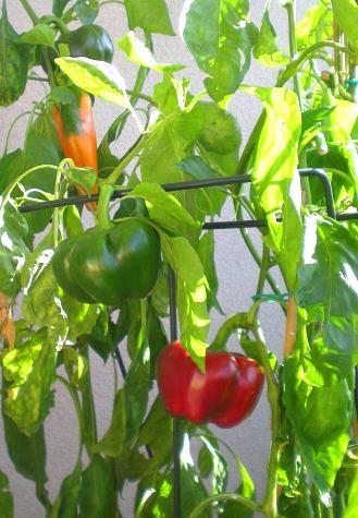Spitz- und Tomatenpaprika