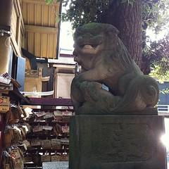 狛犬探訪 阿形子連れ 吽形玉取り 持ってない狛犬もおられる 昭和三十四年の銘