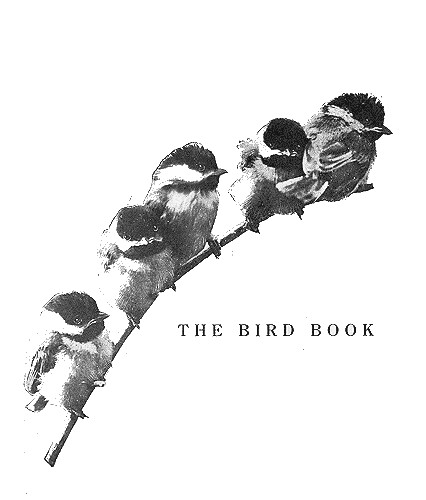Reed Chickadees