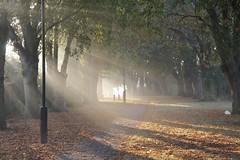 Sprites Lane Pinewood Ipswich late September dawn 3 (Gordon Haws) Tags: autumn trees path lamppost lane sunburst sunrays pathway ipswich septembermorning pinewood dawnlight oldlane spriteslane