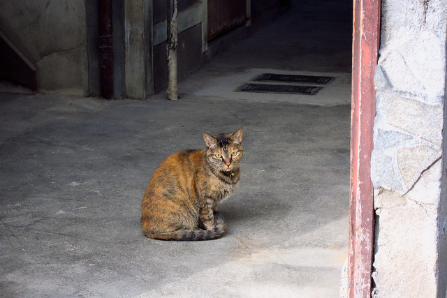 Today's Cat@2011-10-01