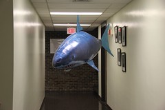 """Air Shark • <a style=""""font-size:0.8em;"""" href=""""http://www.flickr.com/photos/27717602@N03/6202028794/"""" target=""""_blank"""">View on Flickr</a>"""