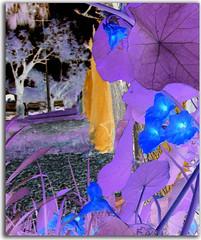 midnight-nasturtiums (artyfishal44) Tags: flowers plants digital photoshop outsider vivid journey hypothetical awardtree artyfishal44 dreamteacher midnightnasturtiums