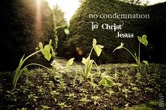 No Condemnation (Sassenach5) Tags: sun sunlight garden hedge flare scripture romans verse kingwood kingwoodcenter kjv romans81