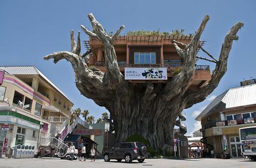 Restaurante en un árbol