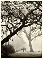 Into the Fog (Feldore) Tags: ireland mist tree fog gardens walking walk foggy belfast spooky figure botanic northern mchugh atmospheric feldore