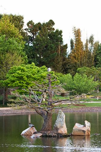 Toowoomba Japanese Gardens-5