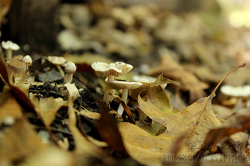 At mushroom level