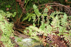 Autumn, foliage (ianharrywebb) Tags: autumn yahoo:yourpictures=autumn iansdigitalphotosiansdigitalphotosautumn yahoo:yourpictures=nature