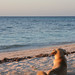 Island Dog - Belize
