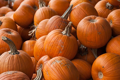 "Pile o' pumpkins • <a style=""font-size:0.8em;"" href=""http://www.flickr.com/photos/30765416@N06/6251571399/"" target=""_blank"">View on Flickr</a>"