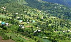 On the Way to Chail - Paao Ke Neeche Jannat ! (Monsoon Lover) Tags: life india green shimla hp flickr valley agriculture economy himachal cultivation himachalpradesh chail stepcultivation sudipguharay paokenicheyjannat paaokeneechejannat