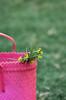 (عفاف المعيوف) Tags: رحلة أخضر زهور سلة فوشي