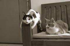 T* & A* (doistrakh) Tags: camera blackandwhite bw cat feline dof tabby tiger finepix calico fujifilm digitalcamera fujinon aiko x100 superebcf23mm12