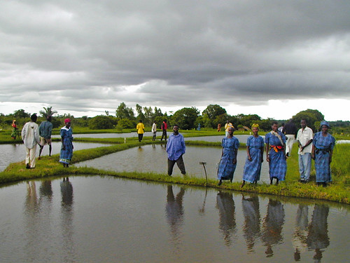 Aquaculture in Africa, WorldFish, 2005