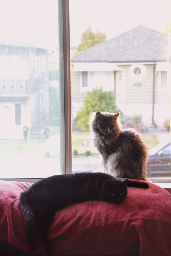window kittehs