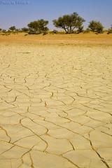 Drought but not forever (TARIQ-M) Tags: tree texture landscape sand waves desert dunes dry drought abstraction riyadh saudiarabia بر الصحراء الرياض crackedearth صحراء رمال رمل طعس كانون drydesert المملكةالعربيةالسعودية canon400d الرمل خطوط جفاف صحاري سدر نفود الرمال كثبان تشققات براري طلح تموجات canonefs18200mmf3556is تموج نفد
