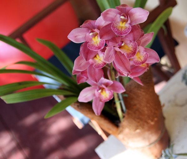 Orchid-2-2