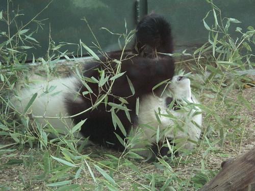 Zoo 0076