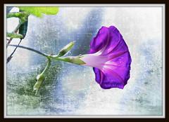 Plant Your Love and Let It Grow (lclower19) Tags: pink music plant flower texture frank nikon purple kim blossom frame klassen ericclapton poolside kerstin 18200mm d90 arborwood