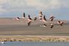 Flamencos (ik_kil) Tags: chile birds surire avesdechile salardesurire andeanflamingo phoenicoparrusandinus flamencoandino regióndearicayparinacota parinasgrande categoríaiucnvulnerablevu monumentonaturalsalardesurire mnsalardesurire