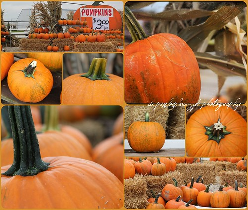 Pumpkins $3.00 ea by DiPics