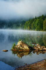 """Mystery of the lake {My first photo on Explore} ("""" Ajnagraphy """" (Jnos Csongor Kerekes)) Tags: wood anna mist lake reflection tree bird nature rock fog forest ana wildlife images explore soul getty t gettyimages wagtail s"""
