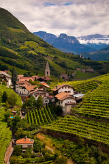 """Ritten Vineyards • <a style=""""font-size:0.8em;"""" href=""""http://www.flickr.com/photos/55747300@N00/6173570066/"""" target=""""_blank"""">View on Flickr</a>"""