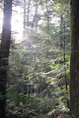 Sunlight Through The Mist